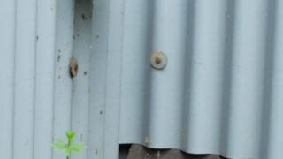 ハチの巣駆除にマグナムジェット