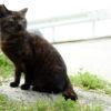 男木島は猫の島