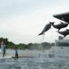 京都水族館のイルカショーを見てきました