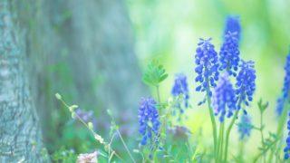 「メアリと魔法の花」を観てきました。